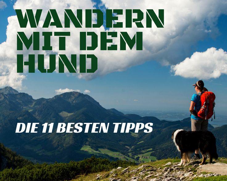 Elf Tipps zum Wandern mit Hund #wandernmithund