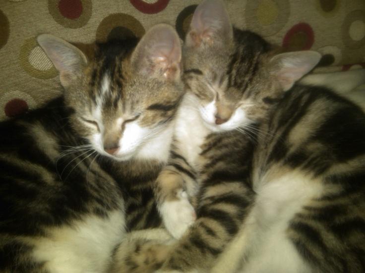 CatLove ALetterToMyCat Cat love, Cats, Animals