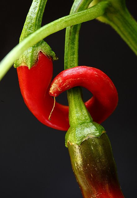 ~~A Hot Embrace ~ chili pepper by AnyMotion~~