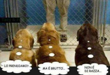 Vignetta sui cani che scelgono l'uomo da adottare