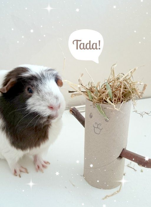 19 best images about guinea pig treats on pinterest cavy for Diy guinea pig things