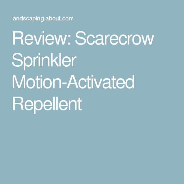 Review: Scarecrow Sprinkler Motion-Activated Repellent