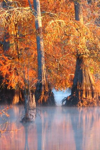 Mississippi - Noxubee National Wildlife Refuge   The Most Beautiful Spot in Every U.S. State   PureWow