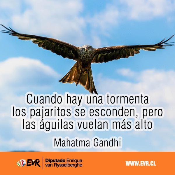 """""""Cuando hay una tormenta los pajaritos se esconden, pero las águilas vuelan más alto"""". Mahatma Gandhi"""