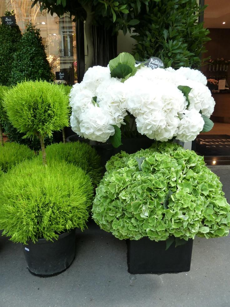 Cypress & Hydrangea - adore white hydrangeas.