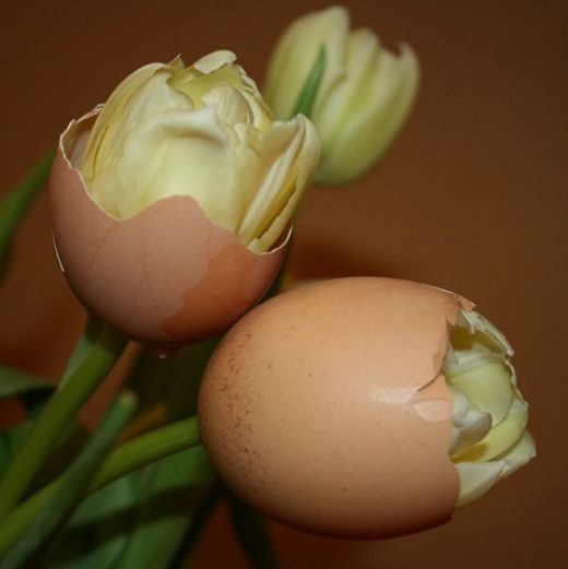 I love this idea. Just poke a hole at the bottom and pull tulip stem through. It would be cute with colored shells too