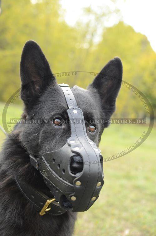 Hunde Maulkorb haltbar