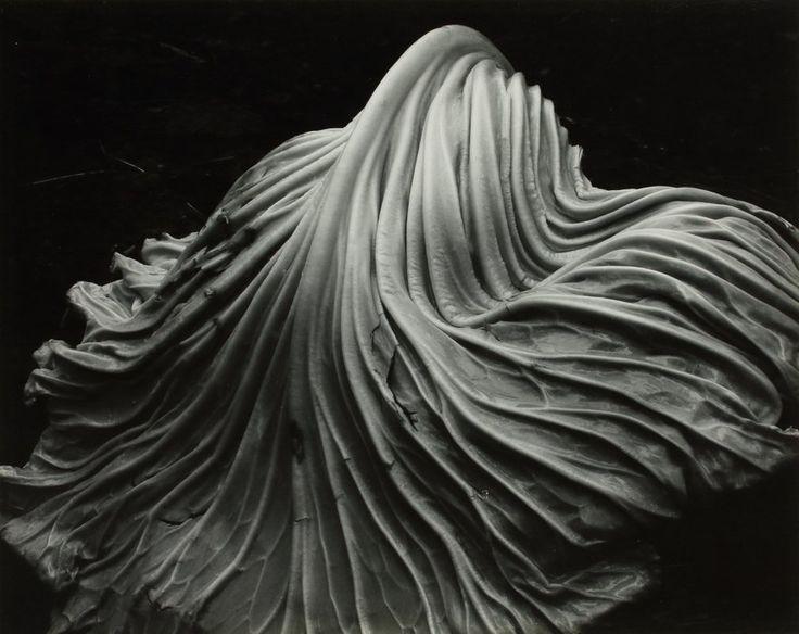 Edward Weston (1886 - 1958), Cabbage Leaf, 1931, tirage Brett Weston 1951, épreuve argentique, don de Jerome Hill, 1970 © Center for Creative Photography, The University of Arizona Foundation/ ADAGP, 2015