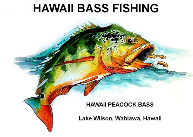 1000 images about freshwater fish on pinterest utah for Fishing in hawaii oahu