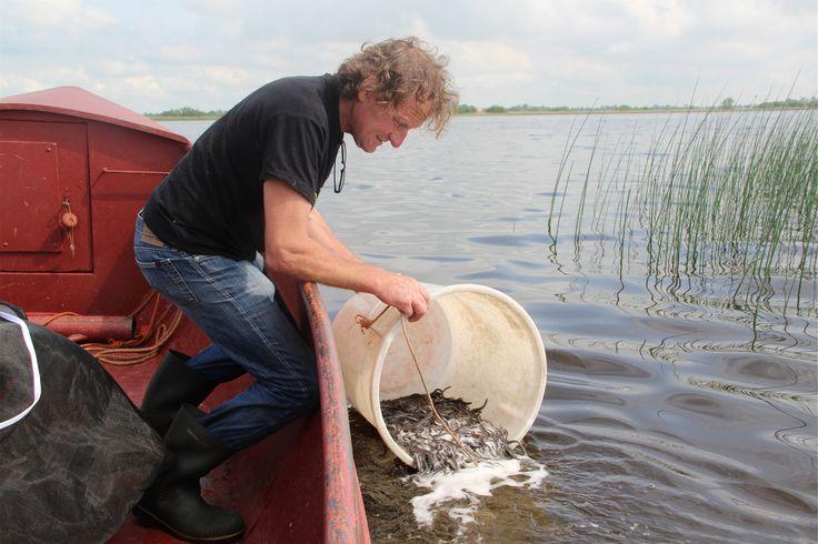 Half miljoen palingen uitgezet in Tjeukemeer en Sneekermeer. Artikel Jousterkrant 21 mei 2014.