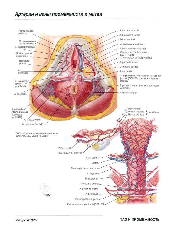 The 280 best Medical images on Pinterest | Nursing, Medical science ...