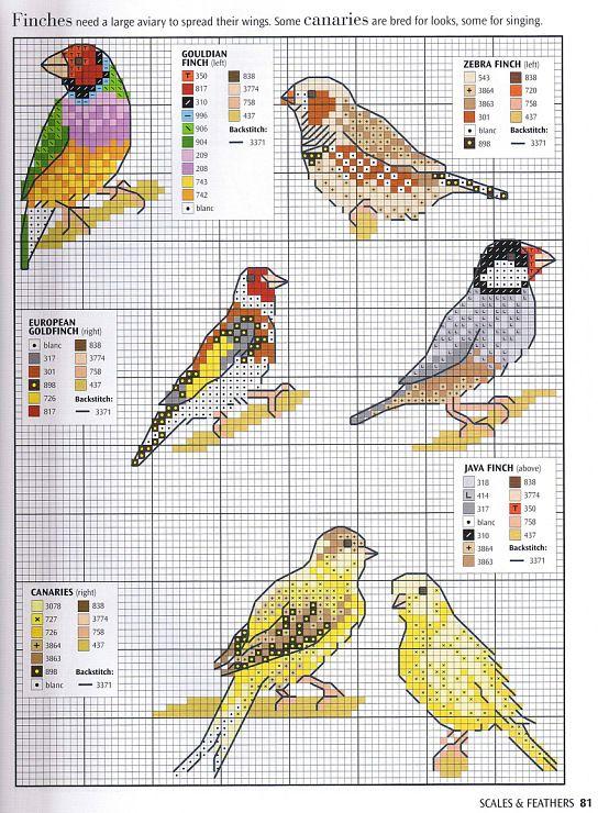 everyday birds