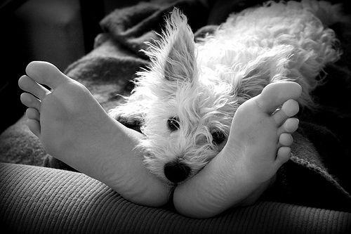 : Animal Pics, Dogs Dogs, Puppies, Darling Doggies, Dogs Westies, Dogs Info, Dogs Monochrome, Cuti Animal, Animal Favourit