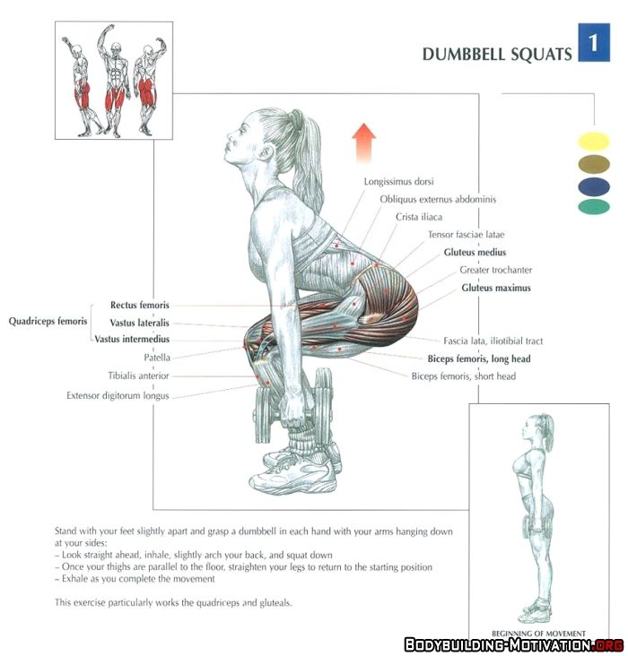 Training Anatomy - Legs - Dumbbell Squats | Gym - Legs ...