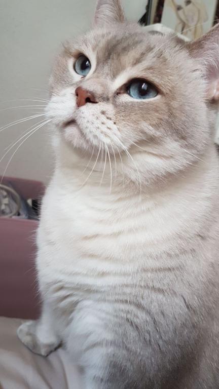 Katzendame fiona sucht in m nchen nach einer mitbewohnerin for Mitbewohner gesucht munchen