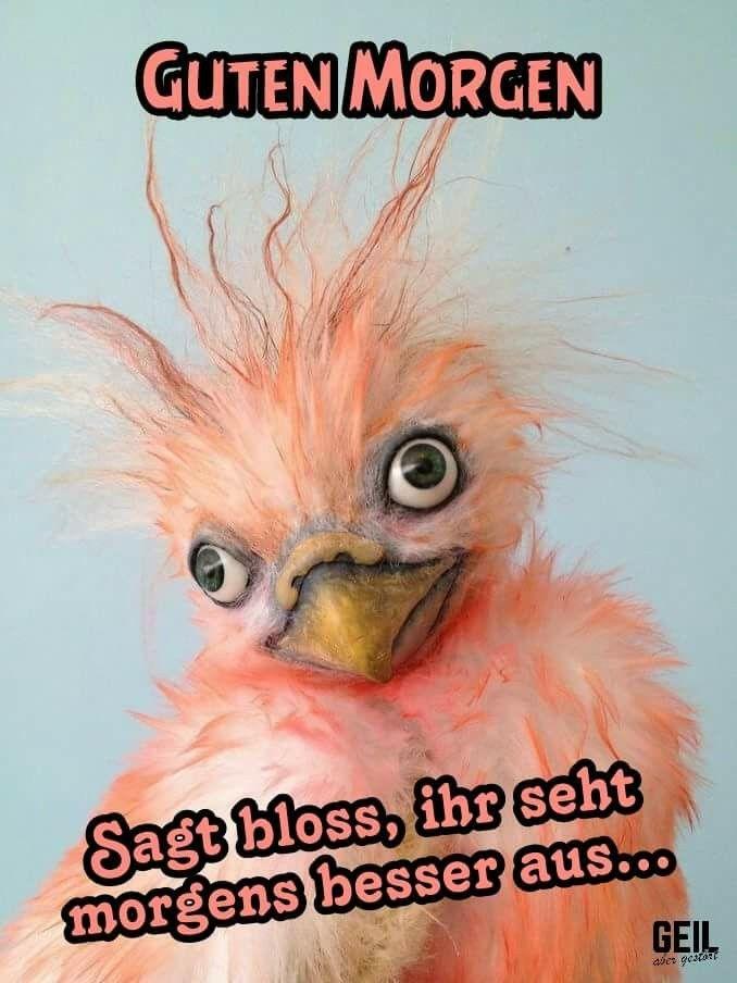 lustige guten morgen sprüche Lustige Sprüche | Lustigesprüche | Good morning, Morning quotes  lustige guten morgen sprüche