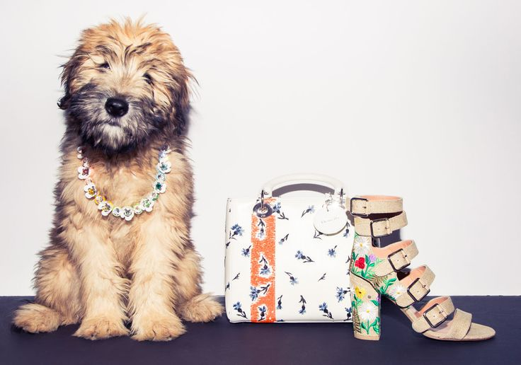 Without further ado, world, meet Walter.  http://www.thecoveteur.com/spring-accessories-2015/