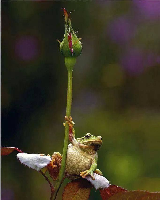 »✿❤Frogs❤✿«