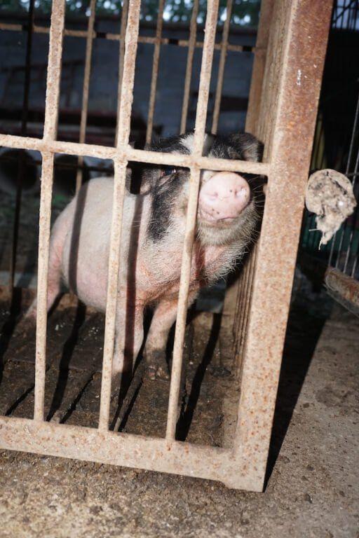 PETA Asia descubre maltrato deplorable, condiciones de vida decrépitas y animales sufriendo en industria de circos de China. ¡Actúa ahora!