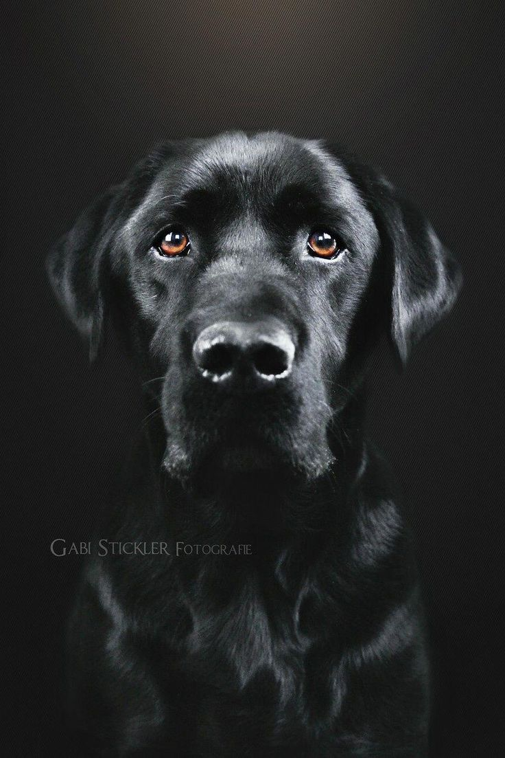 black-lab-profile-picture-girls