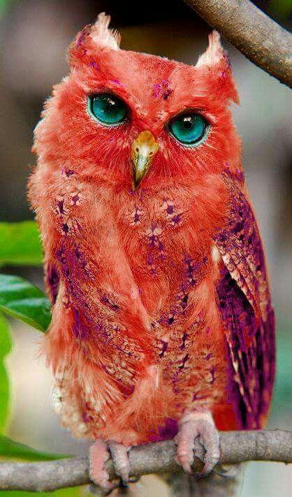 Estoy asín de rojo porque me han dicho que soy muy bonito y me ha dado mucha vergüenza. ...