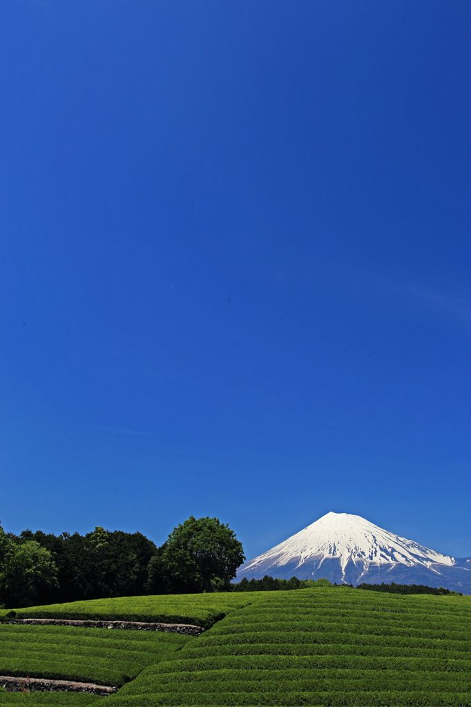 Mount Fuji and green tea fields, Shizuoka, Japan
