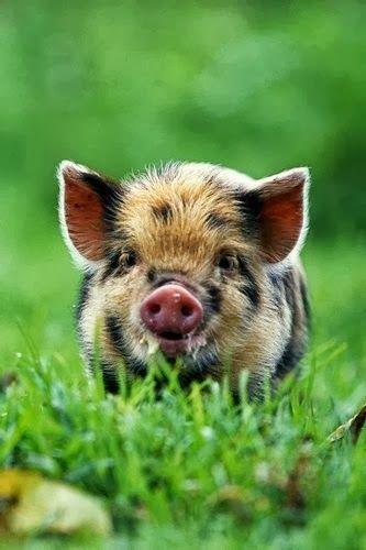 dang it...want him!!