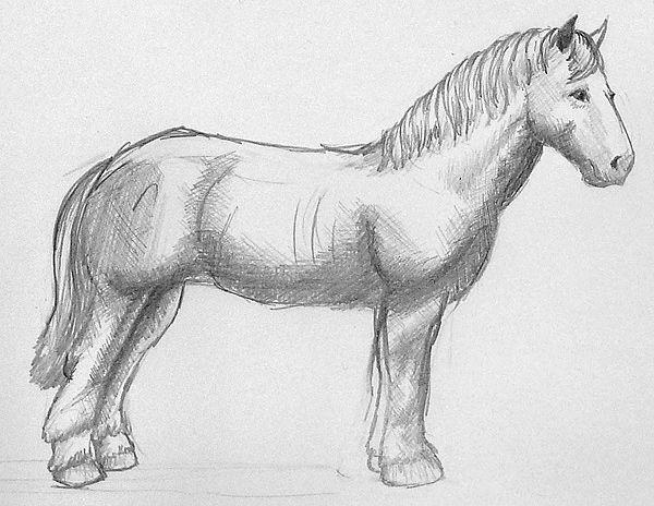 pferde zeichnen mit bleistift ausmalbilder pferde. Black Bedroom Furniture Sets. Home Design Ideas