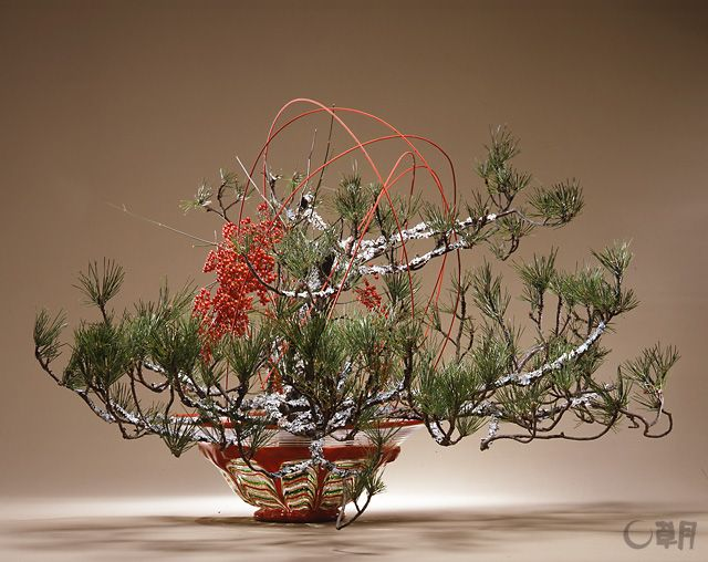 花器の赤とゴールドからインスピレーションを得て、なんてんと着色竹ひごの赤をポイントにしました。 苔松の優雅な枝ぶりが正月気分をもりあげてくれます。花材:苔松、なんてん、着色竹ひご 花器:ガラス花器(岩田久利) A work inspired by the red and gold of the vase with the red of nandina and the colored bamboo sticks as accents. The magnificent spread of pine branches enhances the festive mood of the New Year. Material:Pine with moss, Nandina, Colored bamboo sticks Container:Glass vase #ikebana #sogetsu