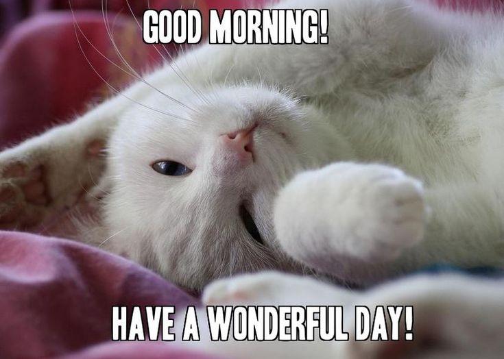 Cute Cat Good Morning Memes for her #Meme | Funny good