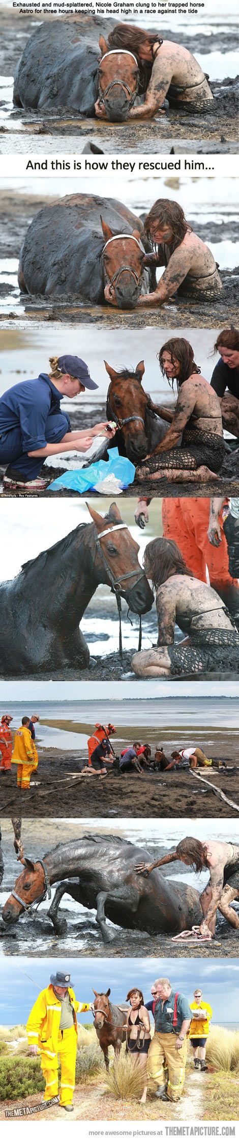 This girl restores faith in humanity…any horse owner would do this cause our horses are our family