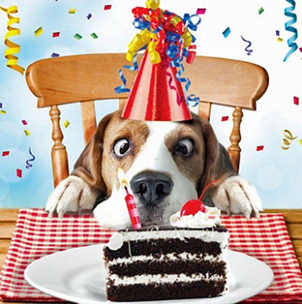 Large Beagle Birthday Wishes Beagle Birthday Card Sniff The Cake