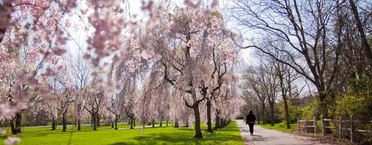 Cherry Blossom Peak Bloom Dates Announced; Top Places To View In Philadelphia In 2016 — Visit Philadelphia — visitphilly.com