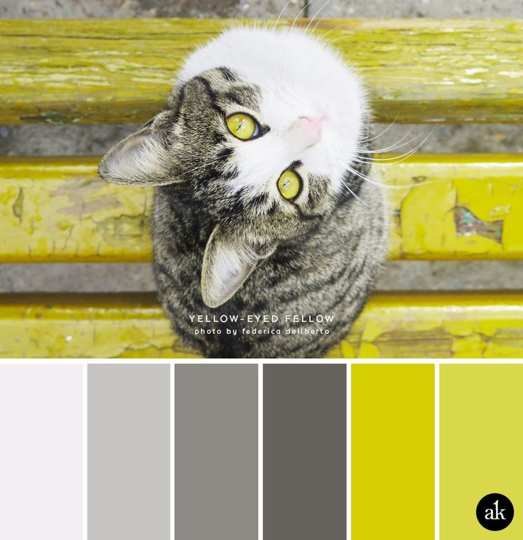 a cat-inspired color palette More