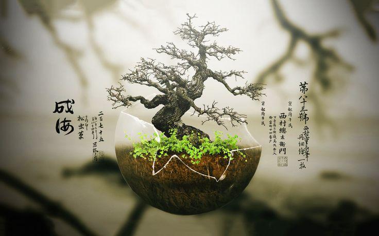 bonsai hd - Google Search
