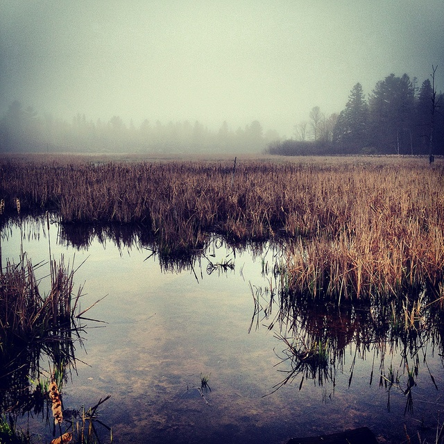 Early morning mist in the South March Highlands   photo phantom power #landscape #nature #Ottawa