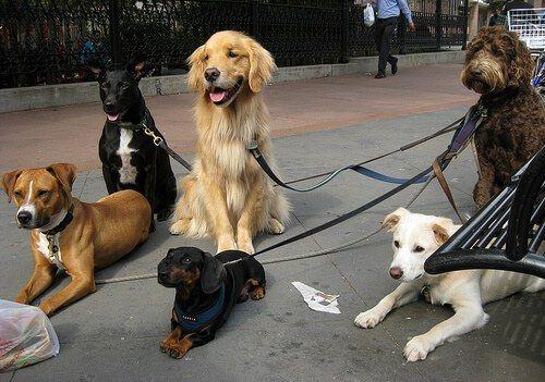 La psicologia canina ci aiuta a conoscere meglio il nostro cane. Tuttavia, non dimenticate che ogni animale è un universo a sé, unico e irripetibile.