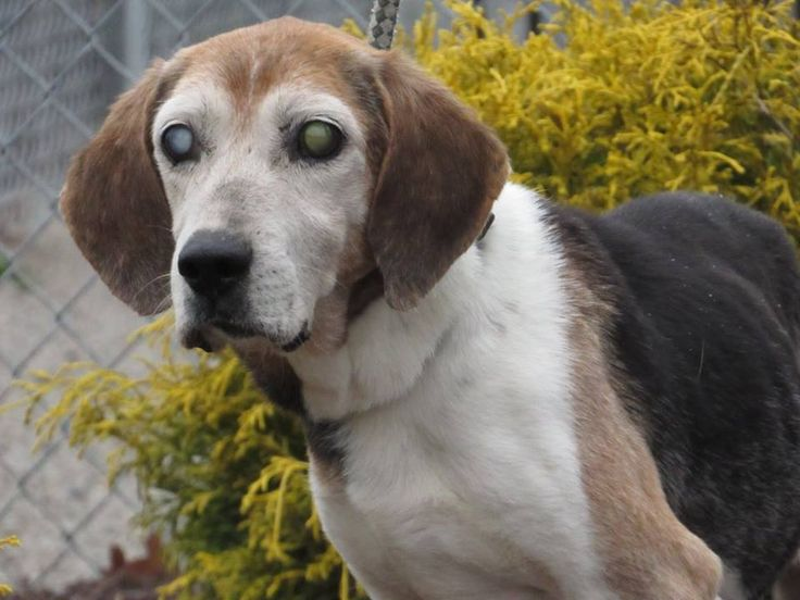 Seniot Dogs For Adoption Nc