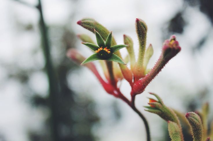 #flowers #plants #nature