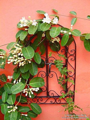 https://flic.kr/p/T75rJ7 | Trapani Appartamento Caricia | Terrazza tra i fiori