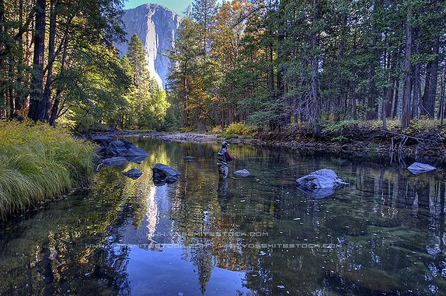 Yosemite fly fishing by chris falkenstein photography for Fishing in yosemite