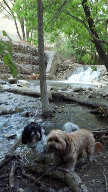 Best Dog Parks Salt Lake