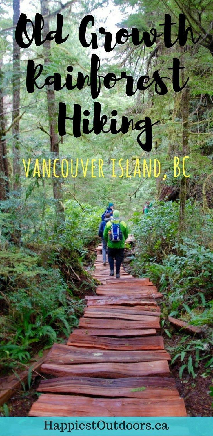 Old growth rainforest hiking on Vancouver Island in British Columbia, Canada. Tofino's best hike: the Big Tree Trail on Meares Island. Hike to giant cedars in Tofino, BC, Canada. #vancouverisland #tofino #hiking