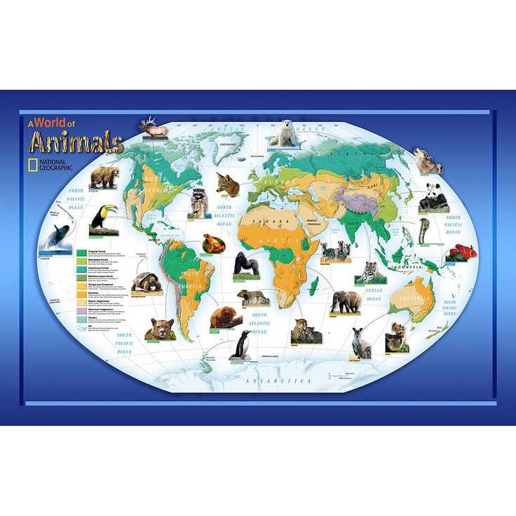 National Geographic Animals of the World Wall Decal, Multicolor