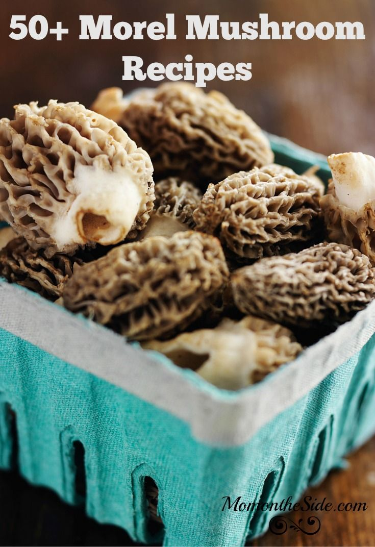I've been hunting and eating Morel mushrooms since childhood. I'm going try them a new way with 50+ Morel Mushroom Recipes I'm sharing on Mom on the Side.