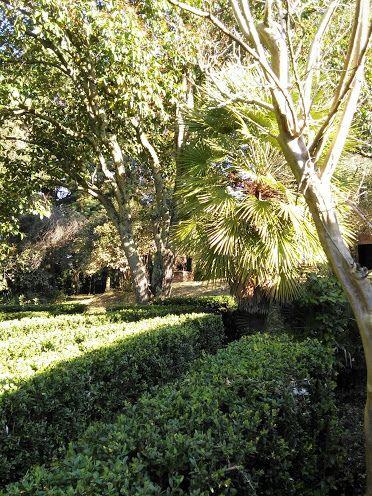 giochi di luce nel #giardino con il #labirinto di #bosso a #Scornello vicino a #Volterra in #agriturismo