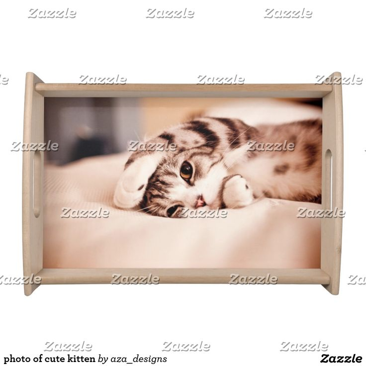 photo of cute kitten. Inspiration to create your product. The photograph must have good resolution. Inspiración para crear tu producto. La fotografía debe tener buena resolución. Bandejas Serving Trays, home decor, decoración. Producto disponible en tienda Zazzle. Decoración para el hogar. Product available in Zazzle store. Home decoration. Regalos, Gifts. #Bandejas #Serving #Trays