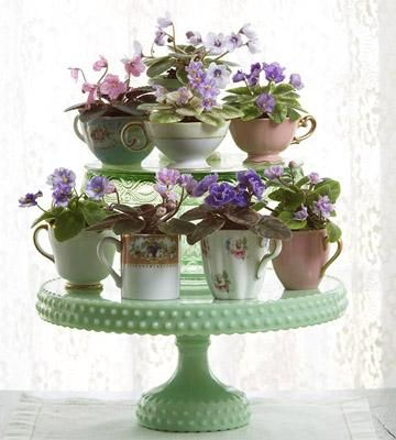 African Violet Plants - but I think the idea of any growing plants in teacups, placed on a tiered tidbit tray, is an excellent display/centerpiece: Midwest Living