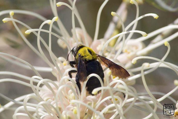 how to make stingless bee hive