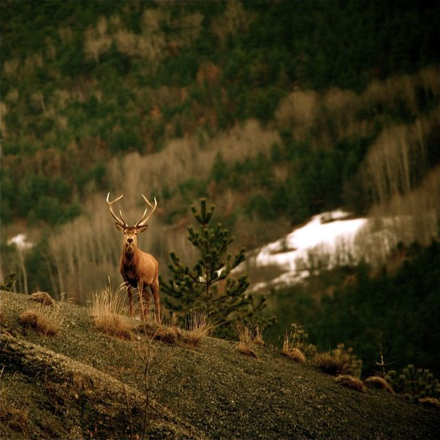 Deer hunter fuck it scene